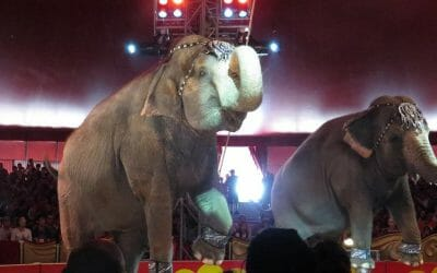 shrine circus elephants