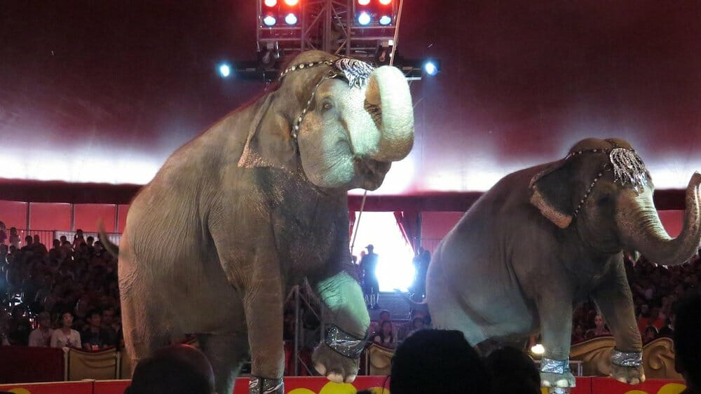 SIGN: End Cruel Elephant Acts at Shrine Circuses