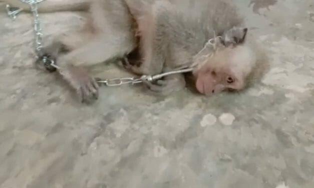YouTube 'Monkey Haters' Form Private Group Where Members Are Paying to Have Baby Monkeys Tortured and Killed on Camera