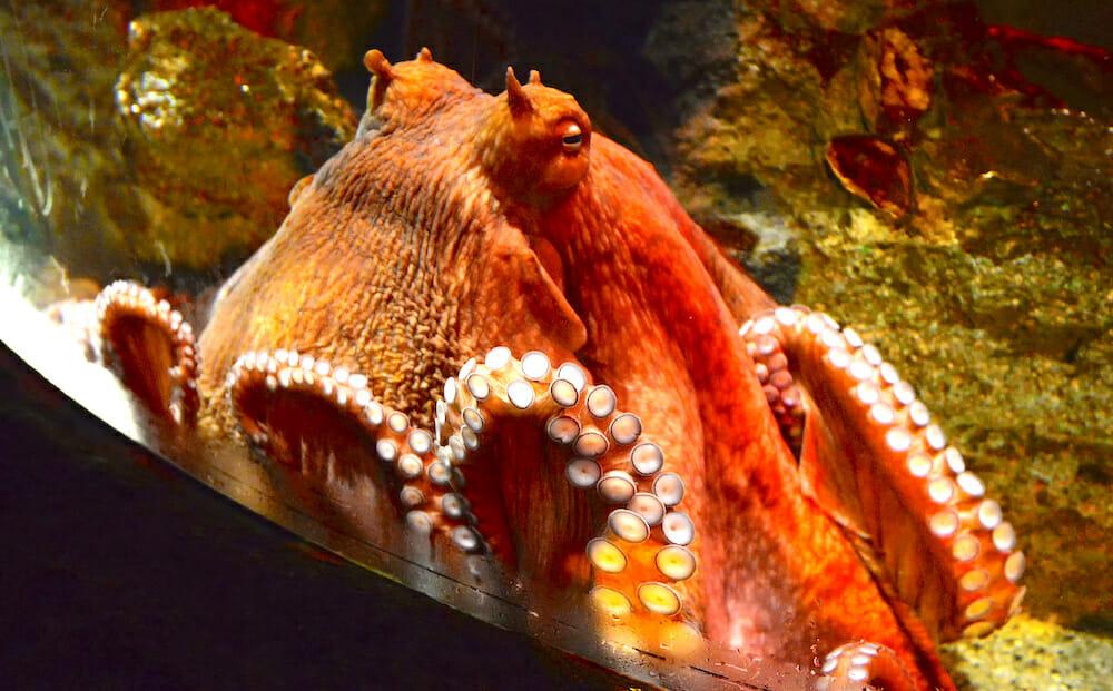 SIGN: Stop Stealing Wild Octopuses for Aquarium Imprisonment