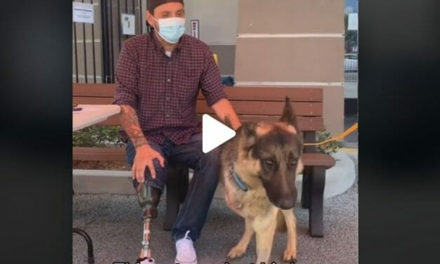 VIDEO: Three-Legged Dog Adopted by Veteran With Prosthetic Leg Moves People To Tears