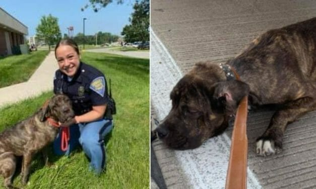 VIDEO: Dog Found Running Through Traffic Safely Rescued by State Trooper