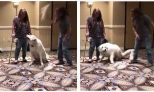 Gellman bonking white dog