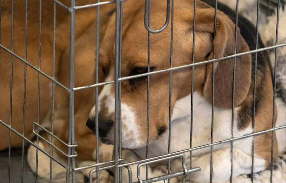 SIGN: End Cruel, Needless Animal Testing in the European Union