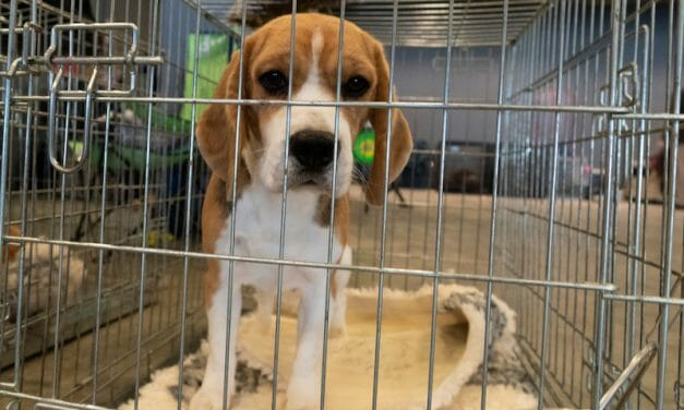 SIGN: Stop Requiring Cruel, Unreliable Animal Tests for US Pharmaceuticals