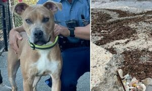 dog chained beach