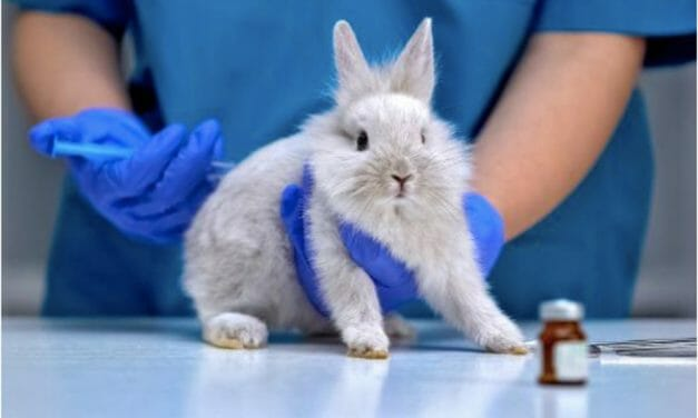 European Parliament Demands Deadlines and Phased-Out End to Animal Testing