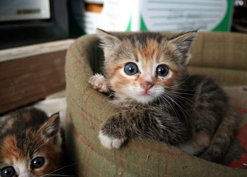SIGN: Justice for Tiny Kittens Tortured by Children in Social Media Video