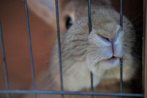 Mexico Bans Animal Testing for Cosmetics in Historic Victory for Animals