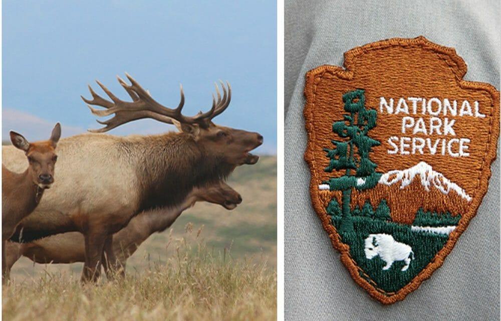 Rare Tule Elk to Face Firing Squad in Horrifying 'Management' Plan