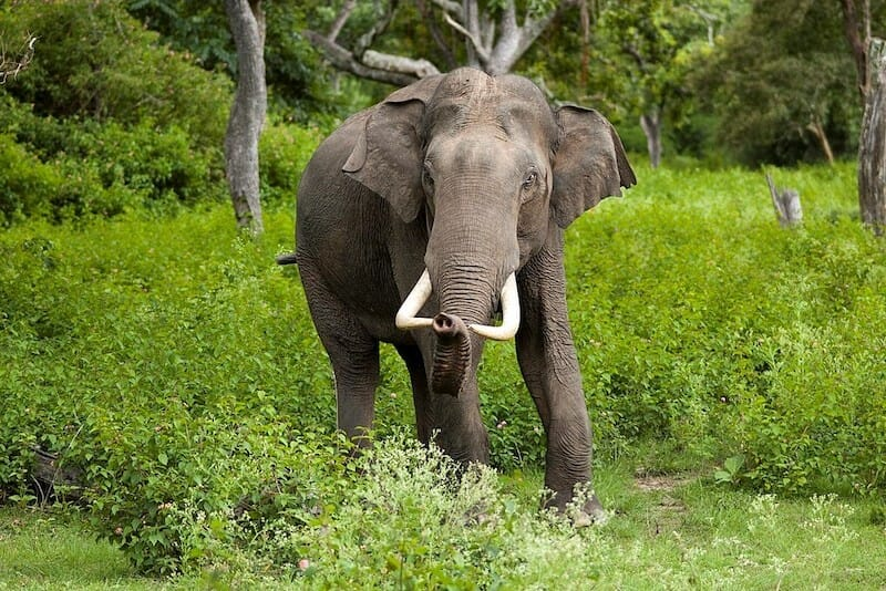 New Elephant Refuge to Welcome First Retired Circus Elephant