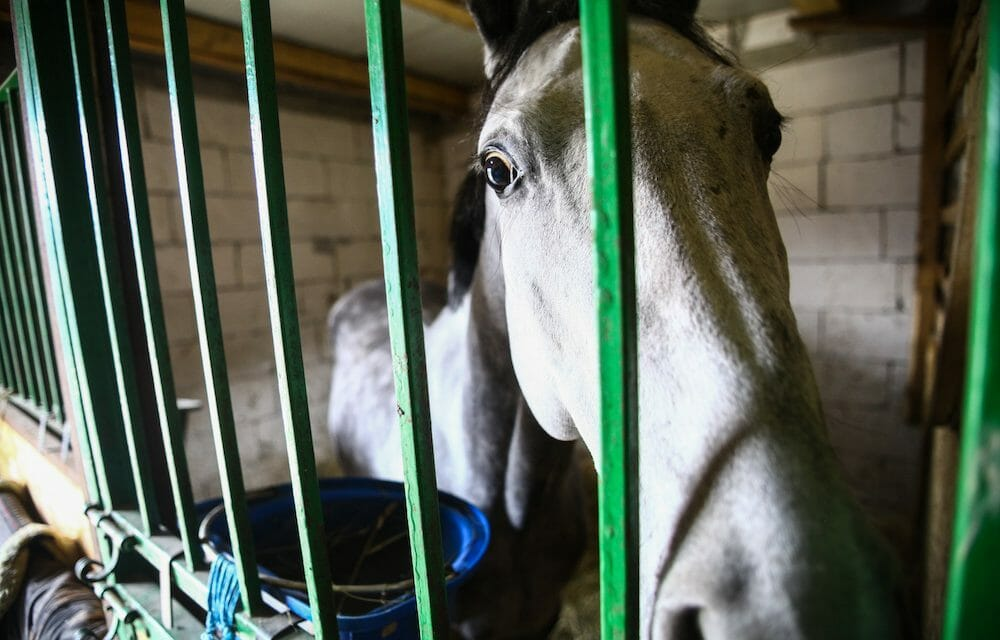 SIGN: Justice for Elderly Horses Punched and Assaulted With Rocks in Half-Hour-Long Attack