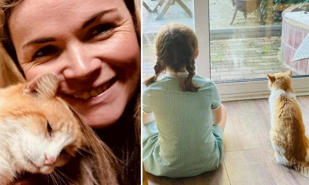 Cat Who Disappeared 12 Years Ago Returns to Find His Best Friend All Grown Up
