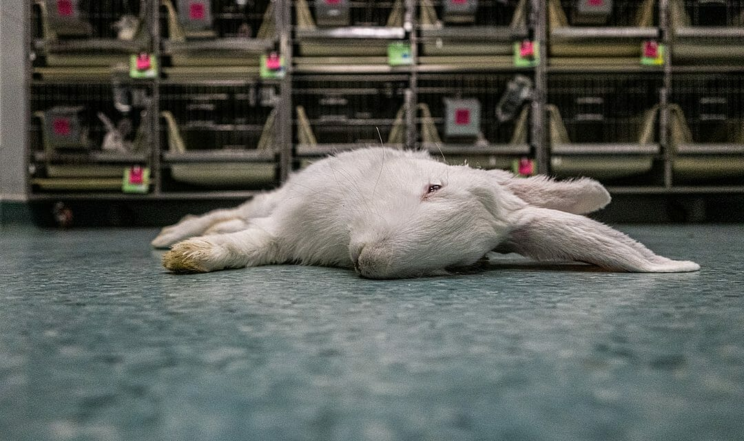 Lessons from COVID-19: Scientists Share 3 'Takeaway' Messages About Animal Testing and Hopes for a More Humane Future