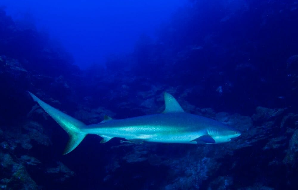 UK Announces Complete Ban on Shark Fins and Shark Fin Products