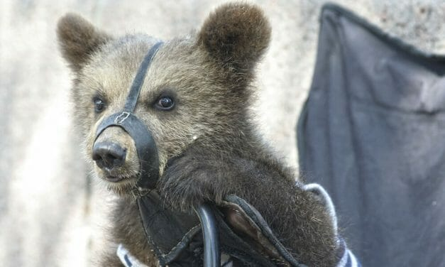 SIGN: End All Live Animal Circuses After Bear Attacked Pregnant Trainer During Show in Russia