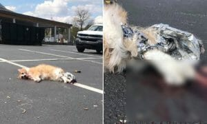 The mutilated body of a tabby cat lies on the blood-splattered pavement of a parking lot.