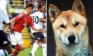 Park Ji-sung and a Korean dog