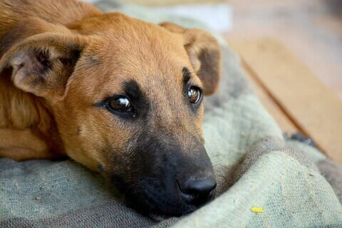 SIGN: Make Animal Abusers Pay for Care During Court Cases