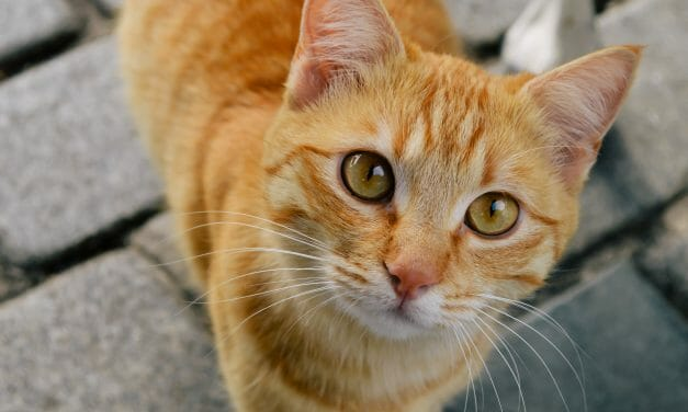 SIGN: Stop Animal Torturers From Getting Pet Victims on Craigslist